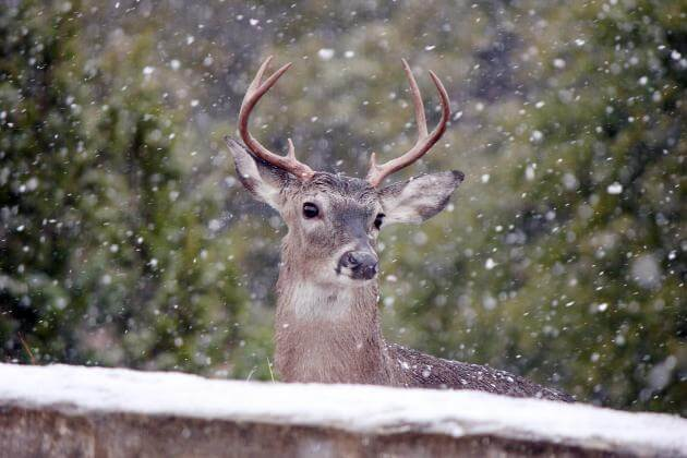 Snowfall and Ice Blankets Counties Again